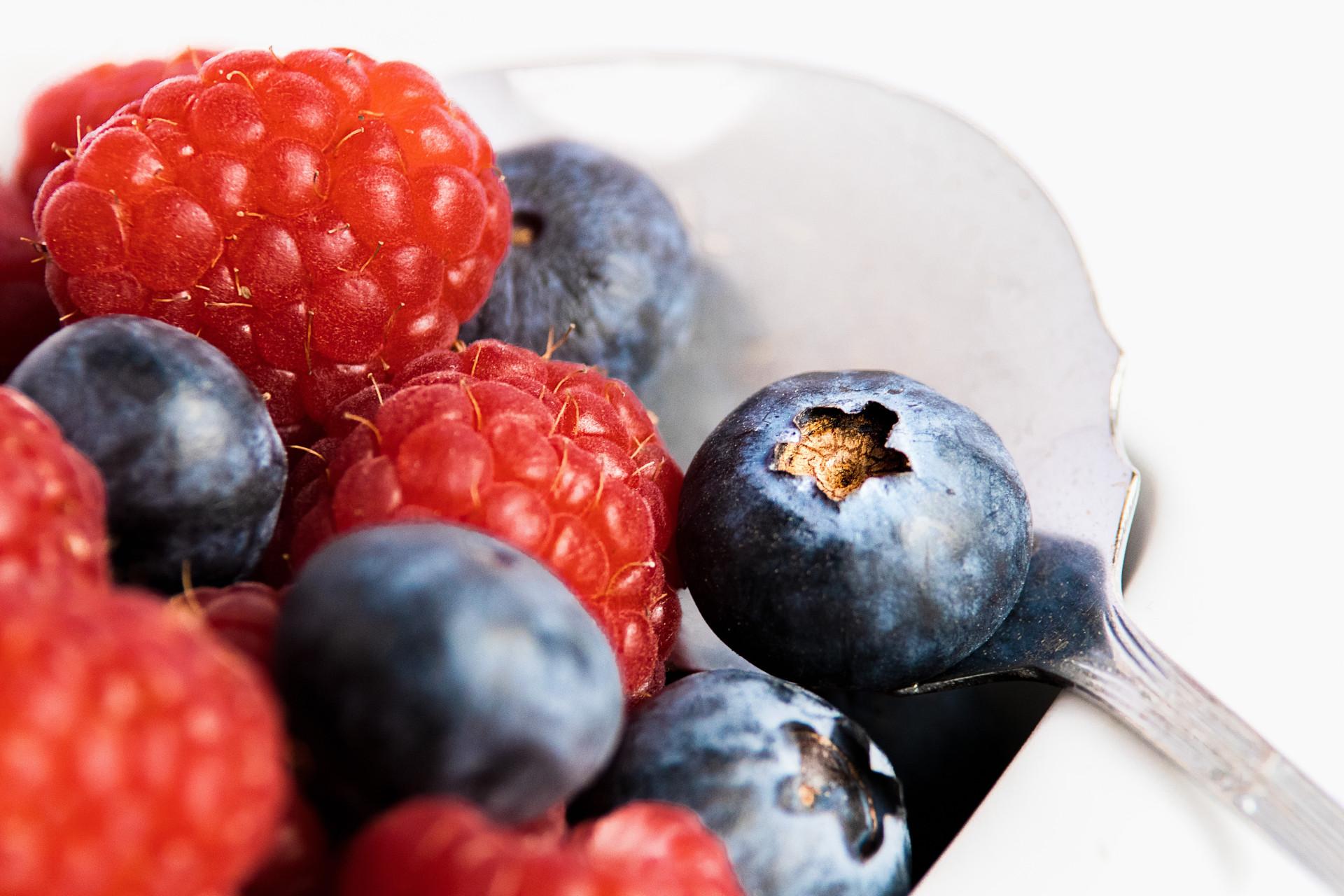 carnivore diet and berries
